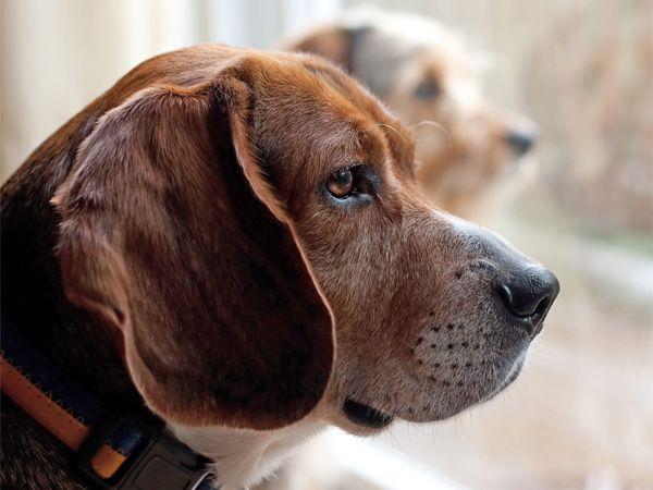 Foto Cães em casa – Leis e Civismo