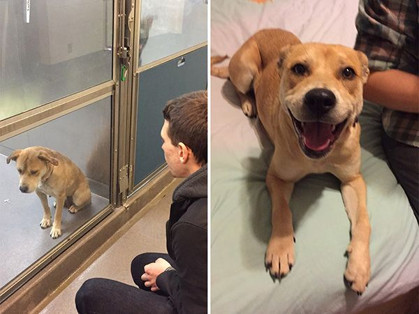 Foto Fotografias antes e depois da adopção