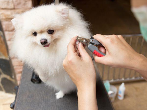 Foto Cortar as unhas do seu cão