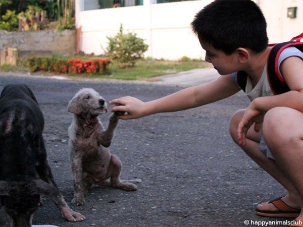 Foto Criança trata de cães abandonados
