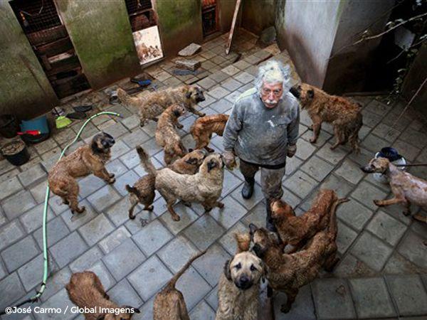 Foto 140 km de estrada por amor aos seus cães
