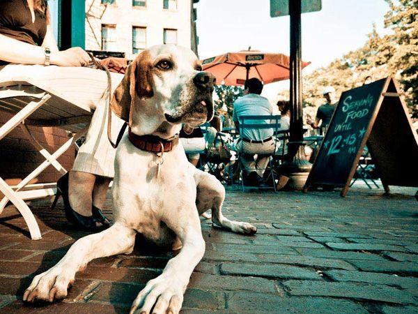 Foto Cães podem estar em esplanadas