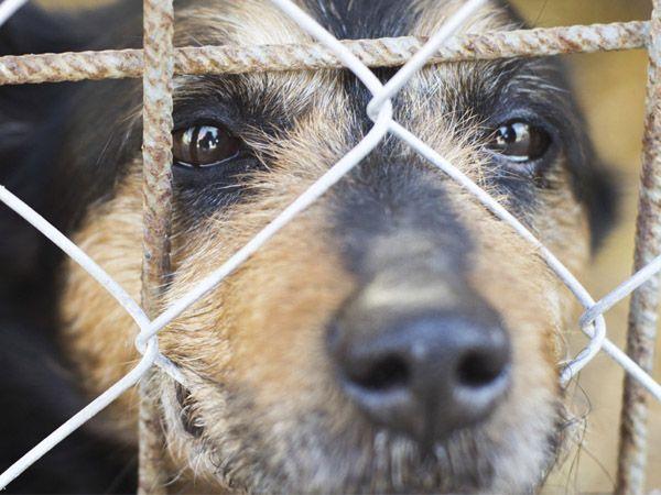 Foto Portugal irá por fim aos canis de abate