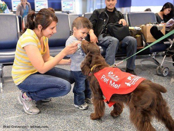 Foto Cães que aliviam o stress antes de entrar num avião