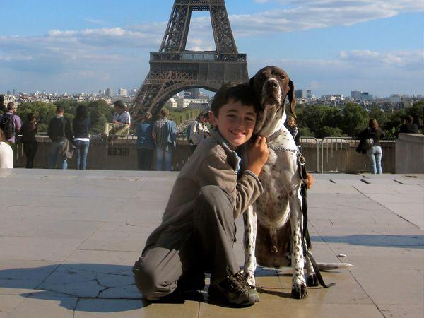 """Foto França altera estatuto de animais para """"seres sensíveis"""""""