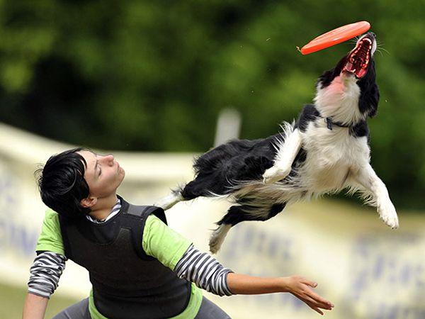 Foto Dog Frisbee: a modalidade