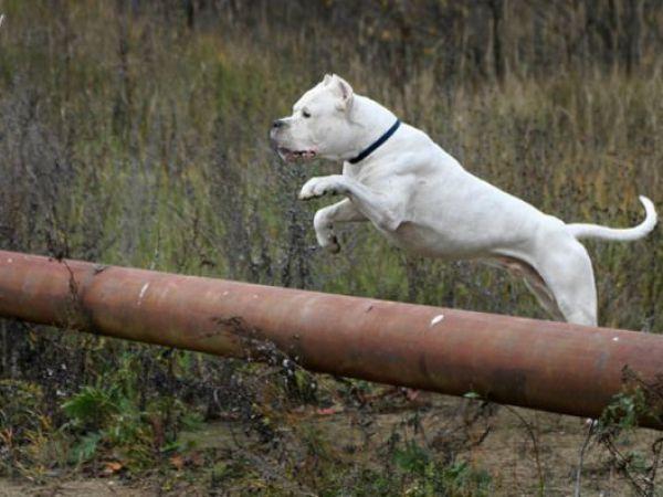 Foto Dogue Argentino