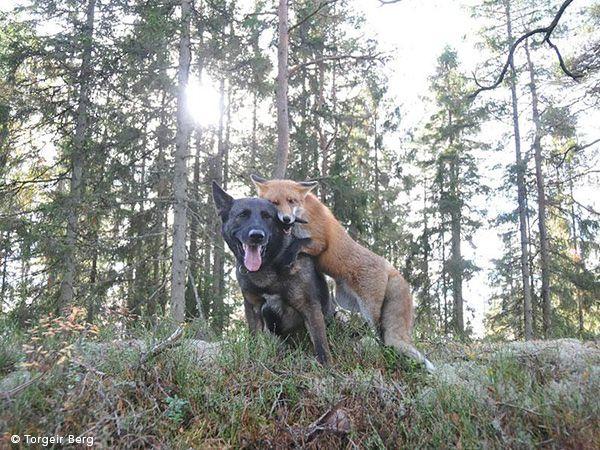 Foto O cão e a raposa