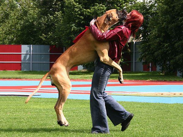 Foto Donos à rasca: o meu cão salta para cima das visitas