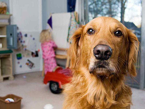 Foto Supervisão das brincadeiras entre cães e crianças
