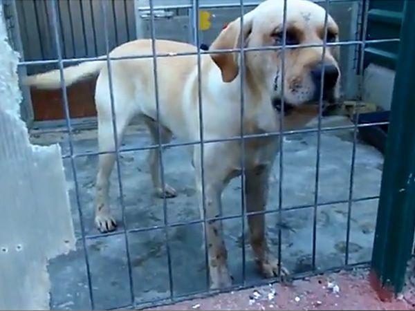 Foto Cão espancado em Castelo Branco