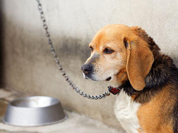 Foto Exigem-se mudanças na lei para animais de companhia