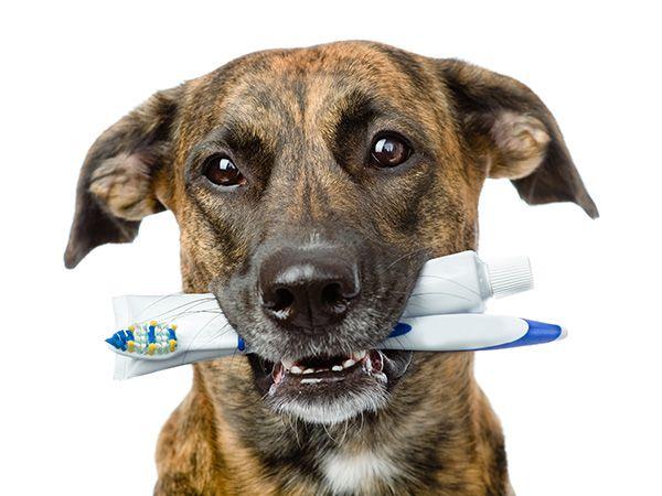 Foto Escovar os dentes do cão