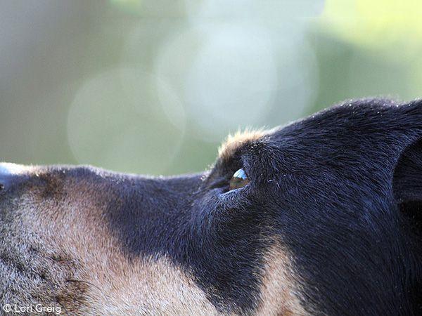Foto Um jogo para acabar com os medos e as ansiedades dos cães