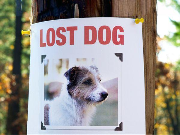 Foto Detective de animais perdidos