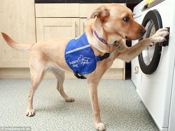 Foto Primeira máquina de lavar controlada por cães