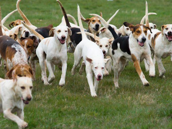 Foto Os cães seguem os mais amigáveis e não os alfas