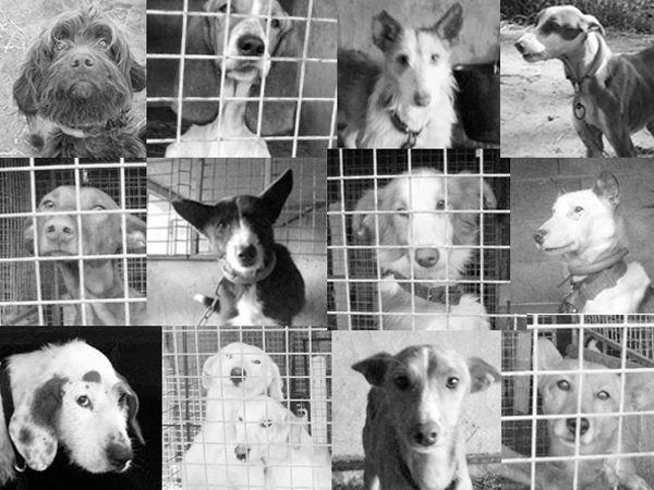 Foto Matilha de Rogil: caçador maltrata os seus cães