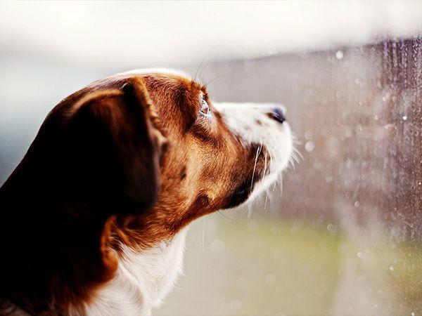Foto Mau tempo: brincadeiras com o seu cão dentro de casa