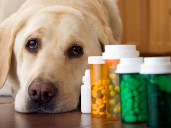 Foto Medicamentos humanos, um perigo para o seu cão