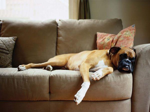 Foto Donos dão anti-depressivos aos cães para tratar de problemas comportamentais