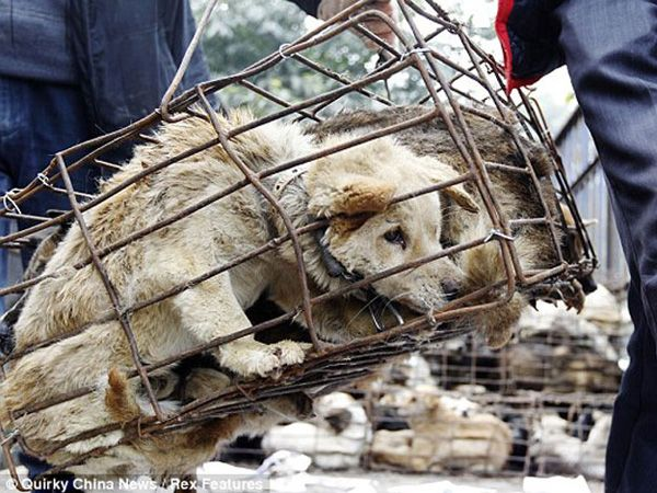Foto Petição para acabar com o mercado da carne de cão na Tailândia