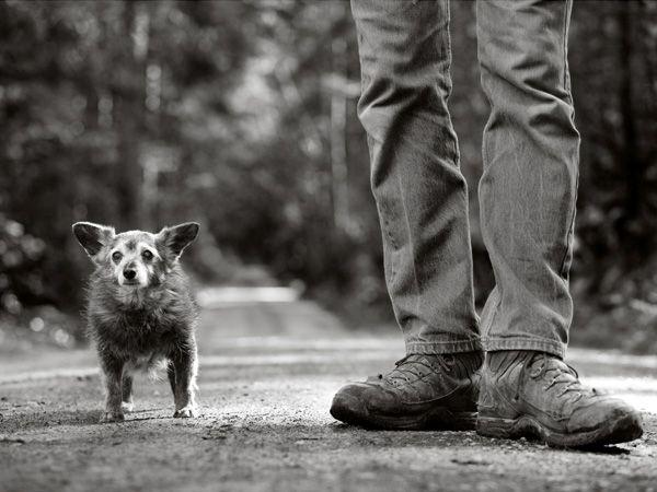 Foto Projecto Senior Dog
