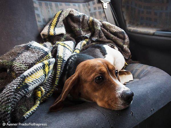 Foto Onde estão os cães resgatados do Instituto Royal