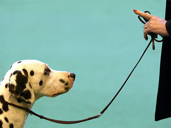 Foto Aprendizagem canina: condicionamento operante
