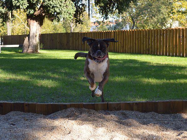 Foto Primeiro parque canino da cidade de Lisboa