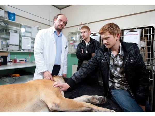 Foto Programa ensina veterinários a apoiar donos em luto pelo animal de estimação