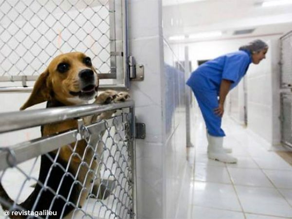 Foto Escândalo Instituto Royal: testes em animais em prol da ciência