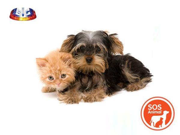 Foto Novo programa da SIC: SOS Animal