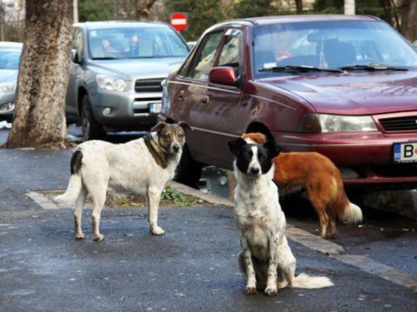 Foto Roménia aprova lei para eutanasiar cães errantes