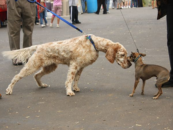 Foto Sociabilizar o seu cão