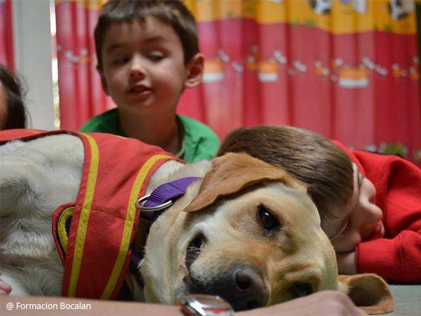 Foto Terapias assistidas com cães