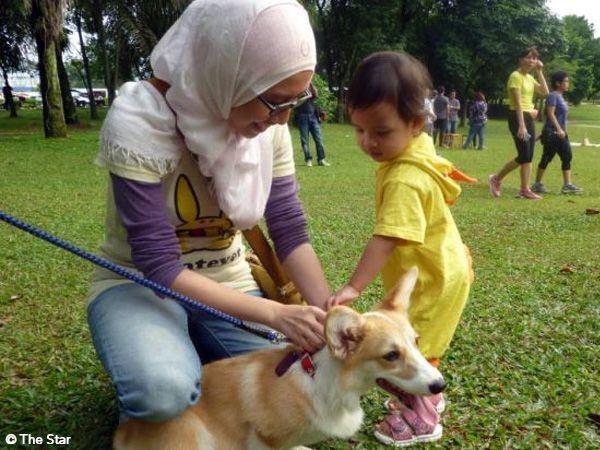 Foto Tocar em cães: um pequeno grande gesto na Malásia
