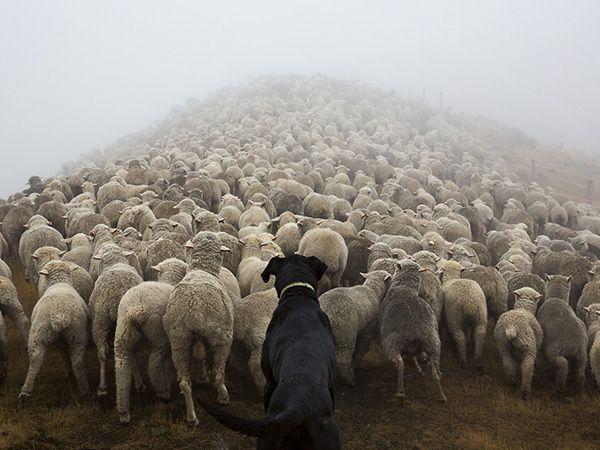 Foto Fotógrafo captura imagens de cães a trabalhar