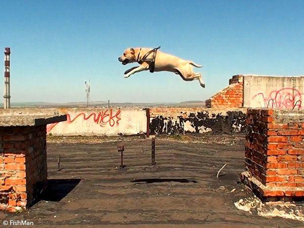 Foto TreT, o cão parkour da Ucrânia