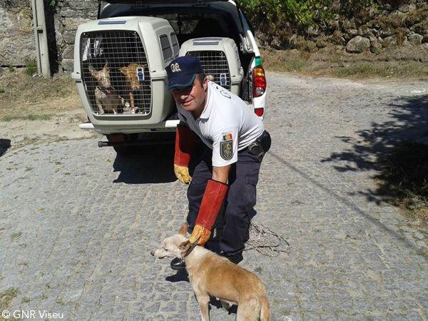 Foto Viseu: Apreensão de 11 cães a viver em condições deploráveis