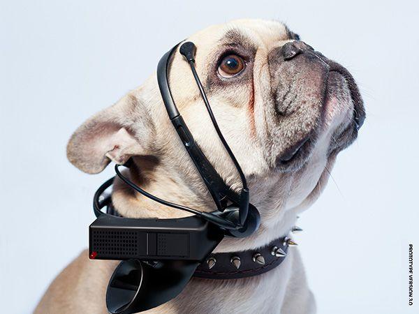 Foto Coleira que traduz os latidos dos cães para linguagem humana